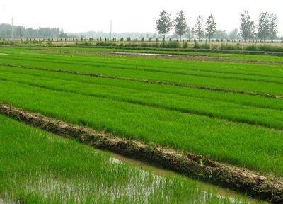 双峰县三东种养农民专业合作社
