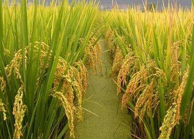 双峰县兄弟种养农民专业合作社