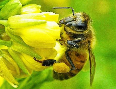 南县天称蜜蜂养殖专业合作社