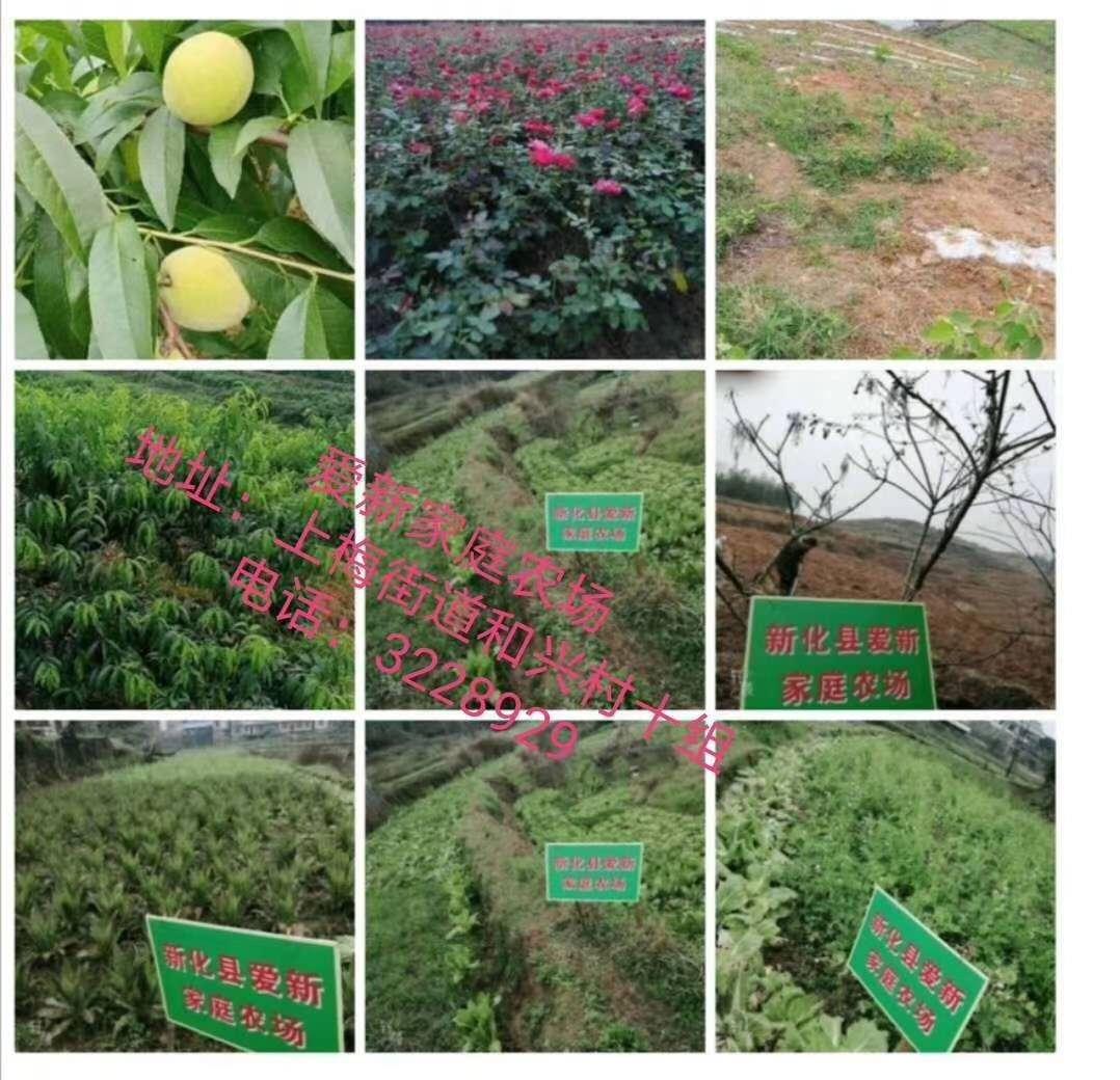 新化县爱新家庭农场