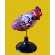 33208心脏解剖模型(价格面议)