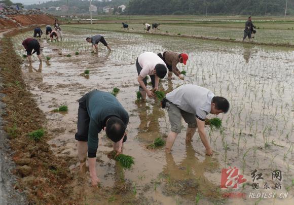审计干部帮助农民插秧